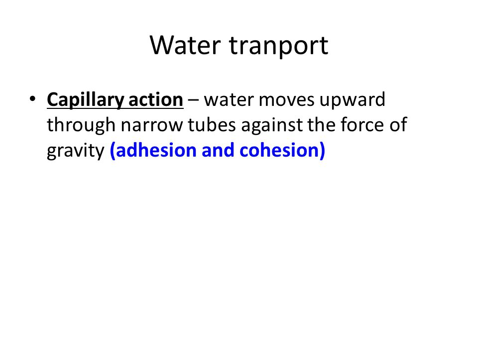 Water tranport Capillary action – water moves upward through narrow tubes against the force of gravity (adhesion and cohesion)