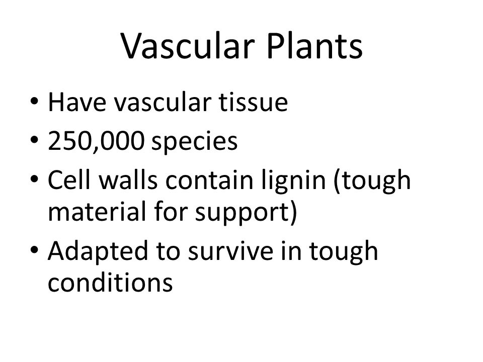 Vascular Plants Have vascular tissue 250,000 species
