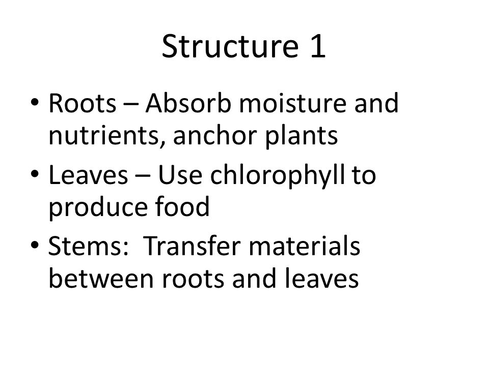 Structure 1 Roots – Absorb moisture and nutrients, anchor plants