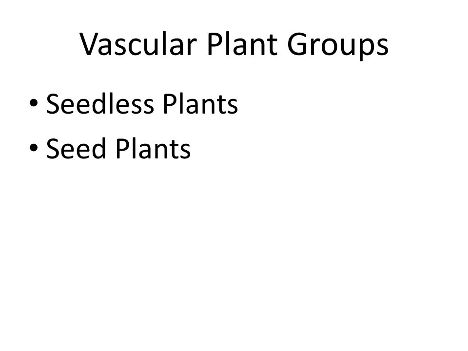Vascular Plant Groups Seedless Plants Seed Plants