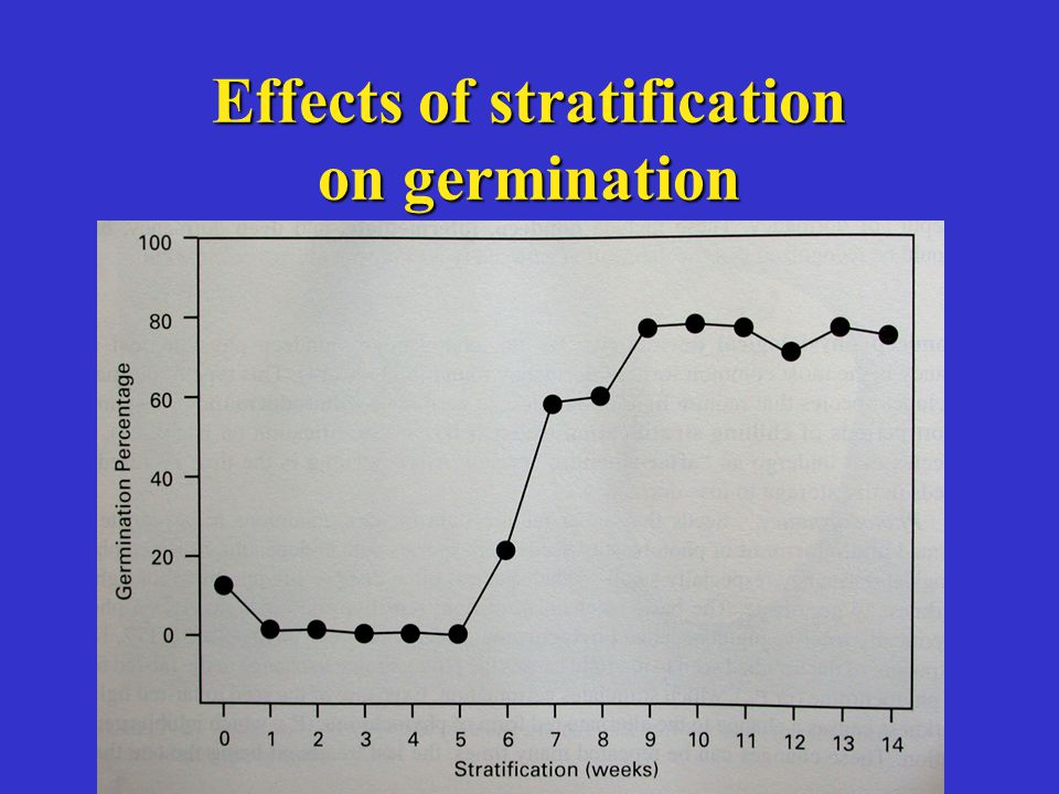 Effects of stratification on germination