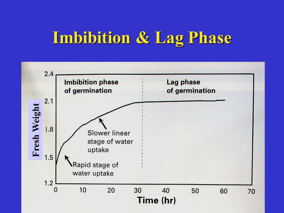 Imbibition & Lag Phase Fresh Weight