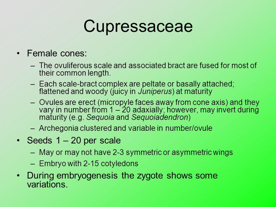 Cupressaceae Female cones: Seeds 1 – 20 per scale