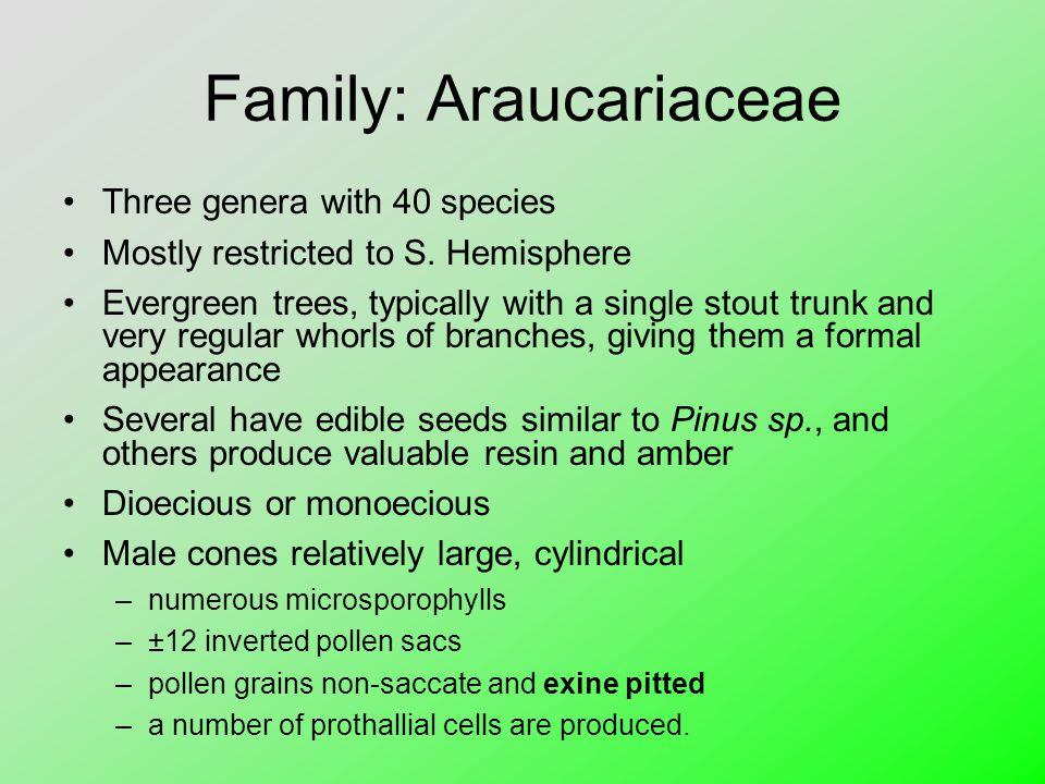 Family: Araucariaceae