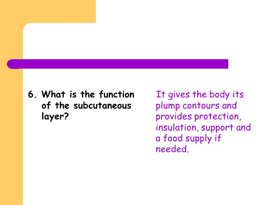 6. What is the function of the subcutaneous layer