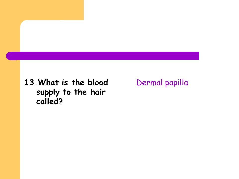 13.What is the blood supply to the hair called