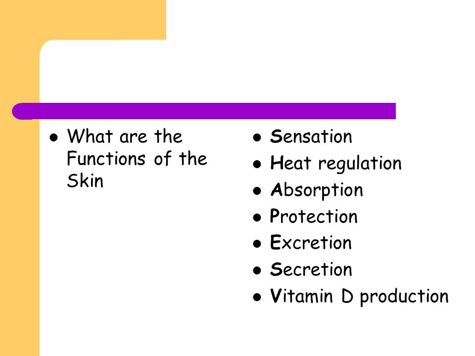 What are the Functions of the Skin