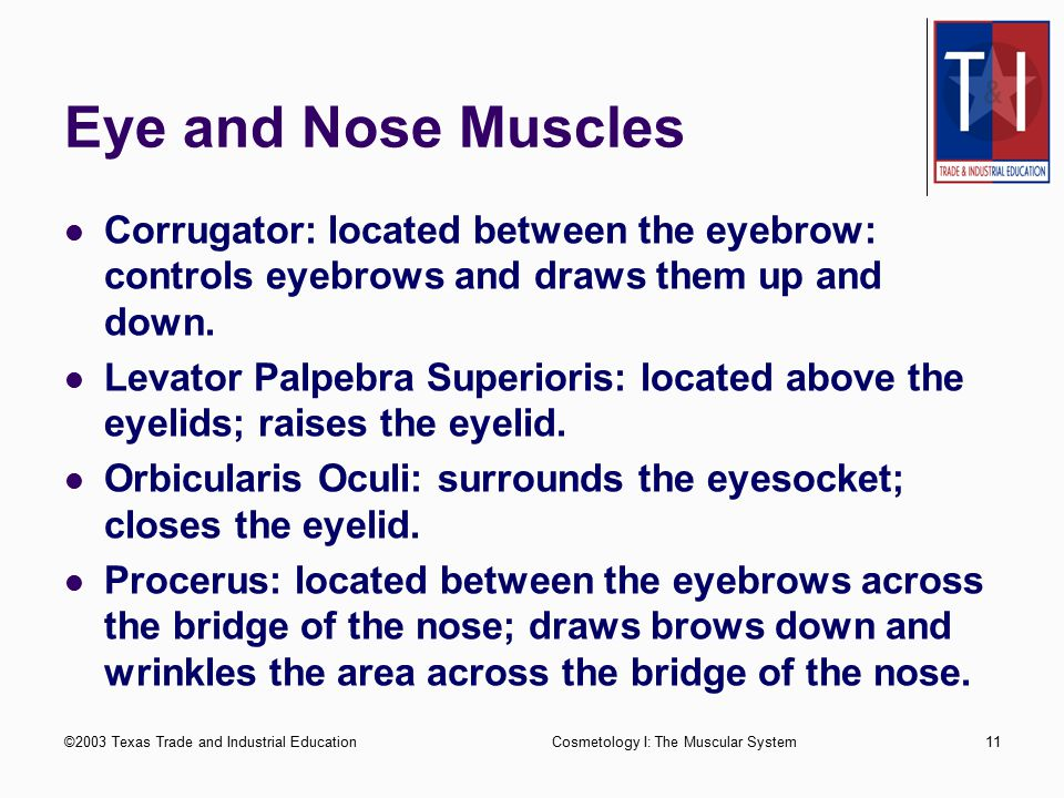Eye and Nose Muscles Corrugator: located between the eyebrow: controls eyebrows and draws them up and down.