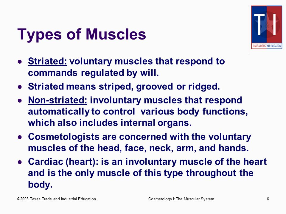 Types of Muscles Striated: voluntary muscles that respond to commands regulated by will. Striated means striped, grooved or ridged.