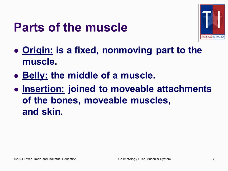 Parts of the muscle Origin: is a fixed, nonmoving part to the muscle.
