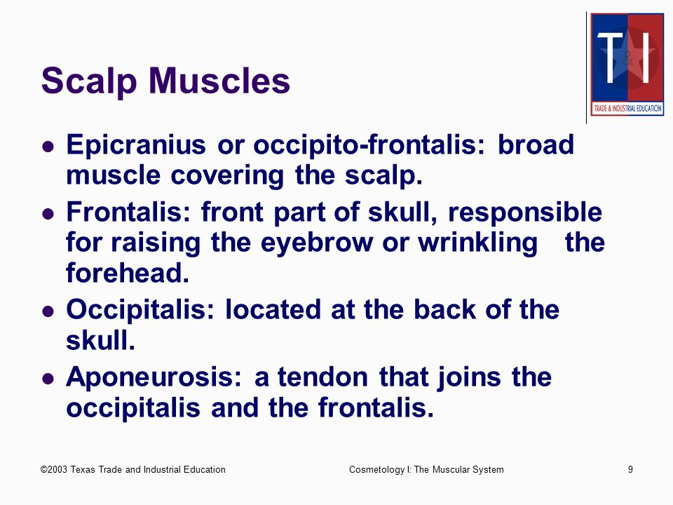 Scalp Muscles Epicranius or occipito-frontalis: broad muscle covering the scalp.