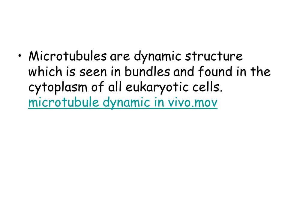 Microtubules are dynamic structure which is seen in bundles and found in the cytoplasm of all eukaryotic cells.
