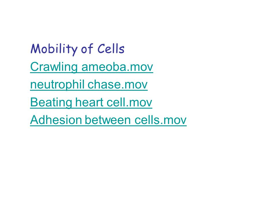 Mobility of Cells Crawling ameoba.mov. neutrophil chase.mov.