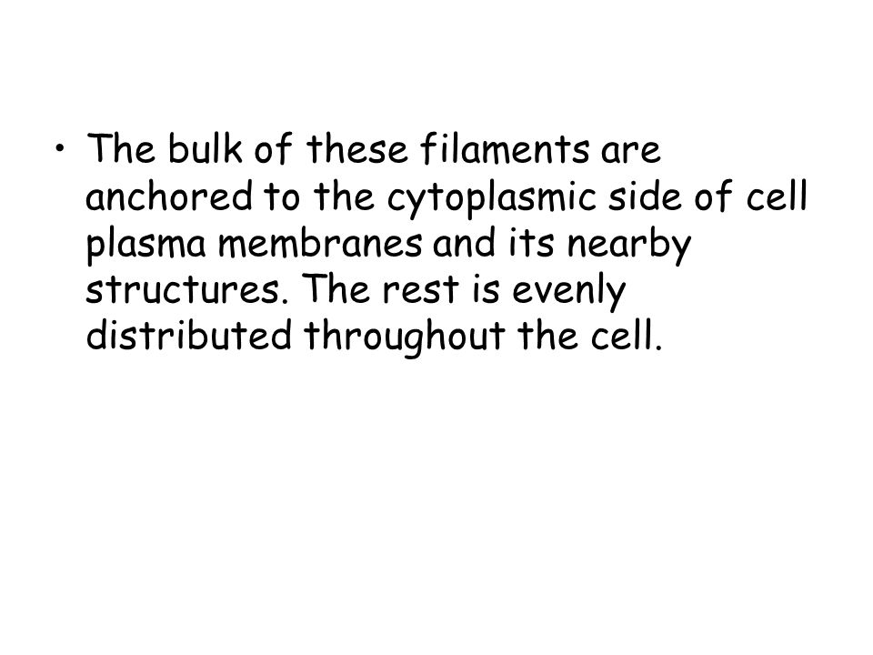 The bulk of these filaments are anchored to the cytoplasmic side of cell plasma membranes and its nearby structures.