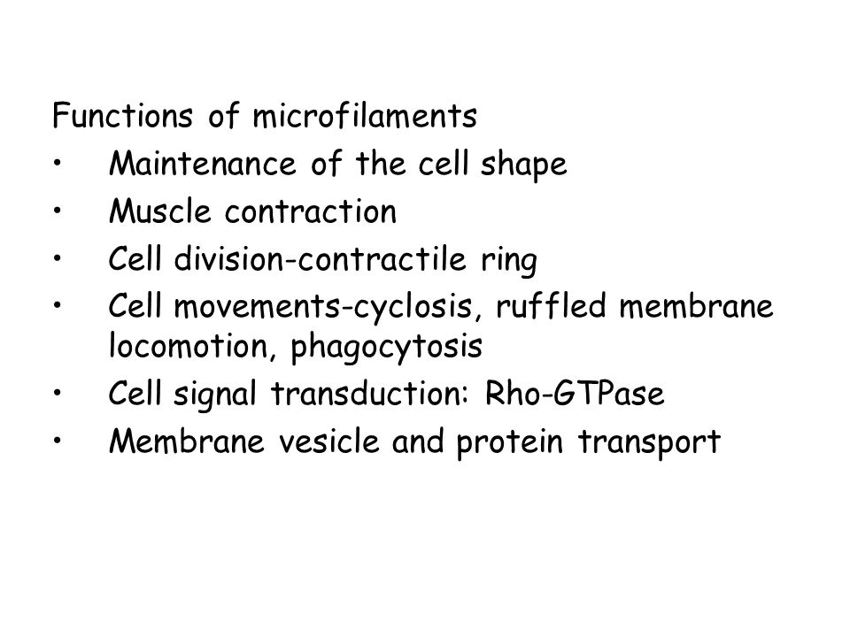 Functions of microfilaments