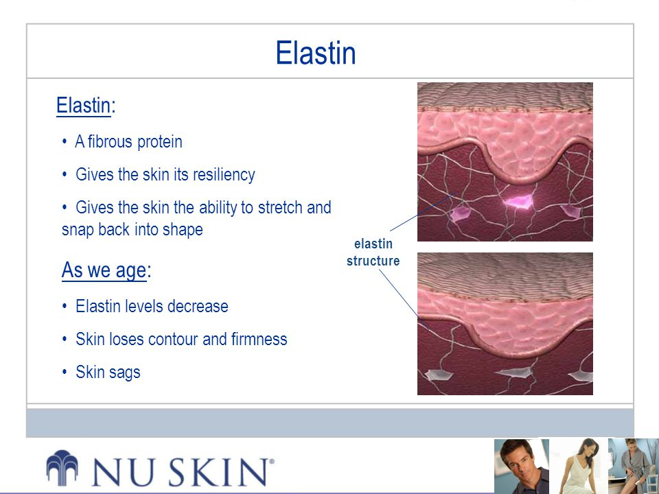 Elastin Elastin: As we age: A fibrous protein