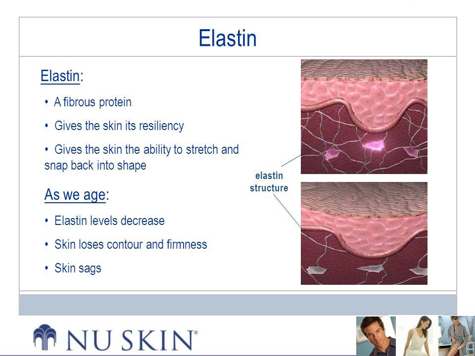 Elastin Elastin: As we age: A fibrous protein