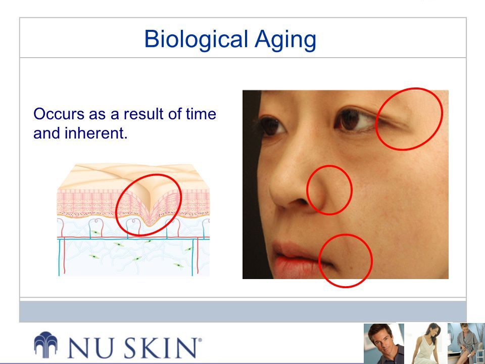 Biological Aging Occurs as a result of time and inherent.