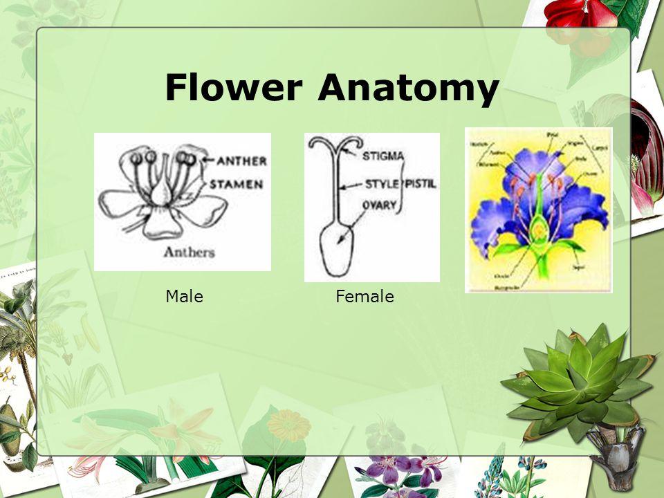 Flower Anatomy Male Female