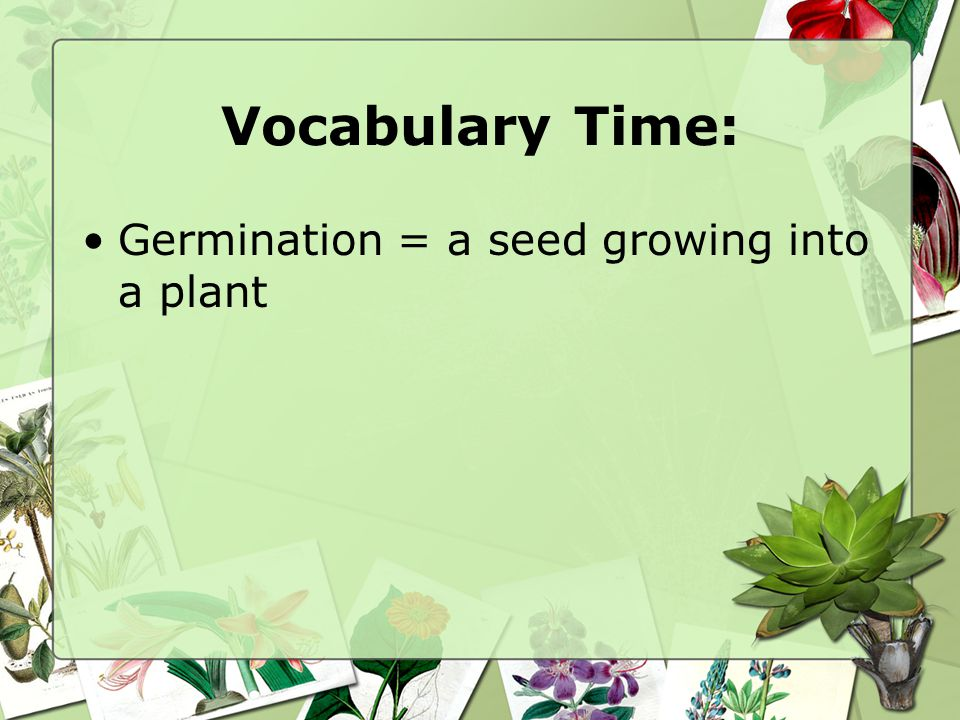 Vocabulary Time: Germination = a seed growing into a plant