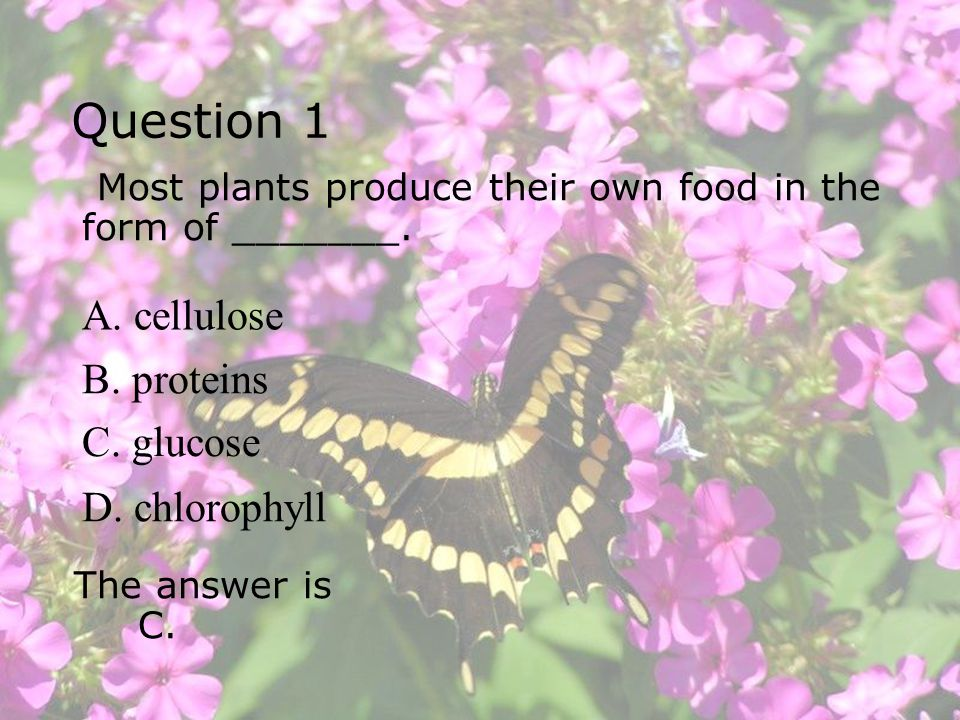 Question 1 A. cellulose B. proteins C. glucose D. chlorophyll