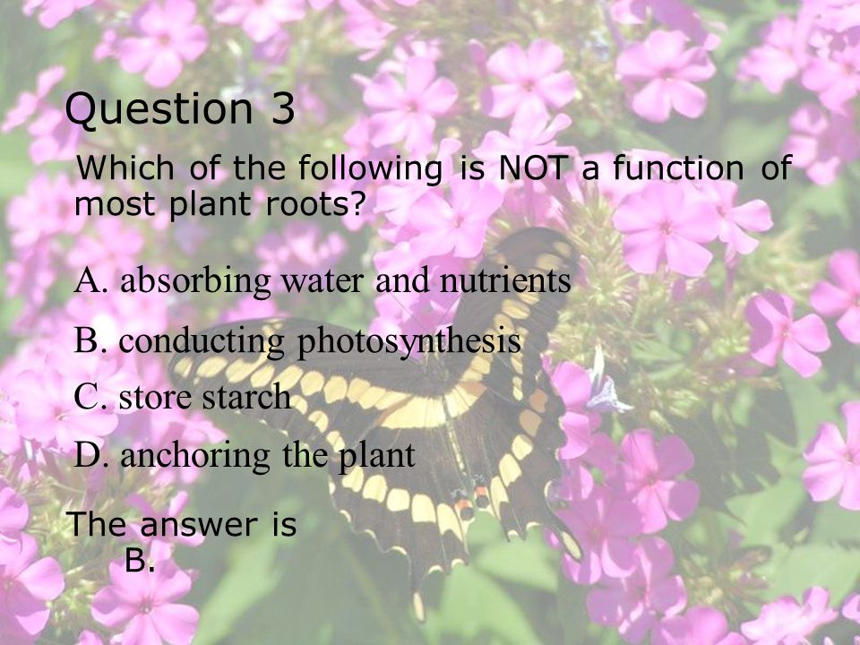 Question 3 A. absorbing water and nutrients