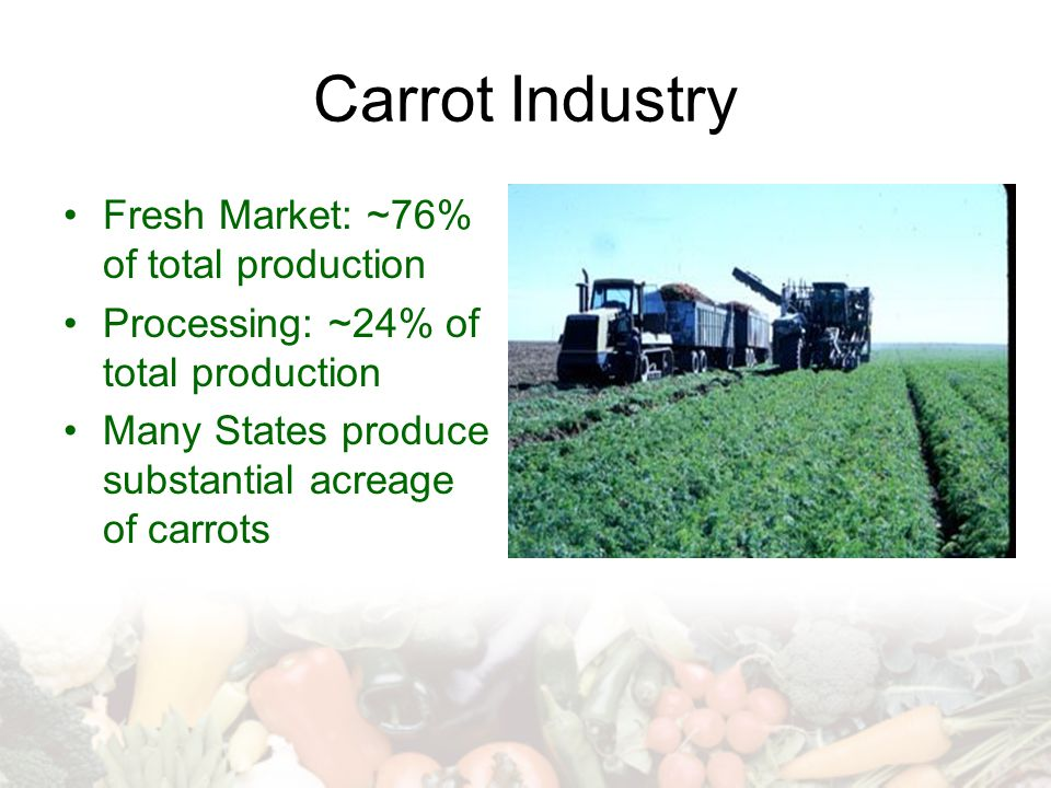 Carrot Industry Fresh Market: ~76% of total production
