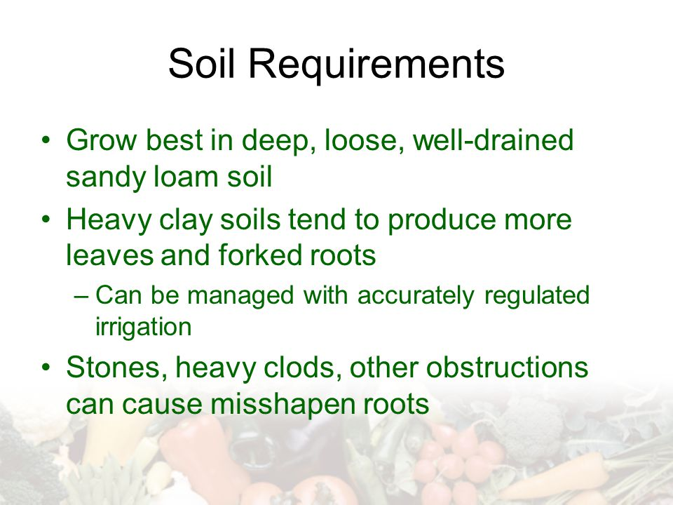 Soil Requirements Grow best in deep, loose, well-drained sandy loam soil. Heavy clay soils tend to produce more leaves and forked roots.