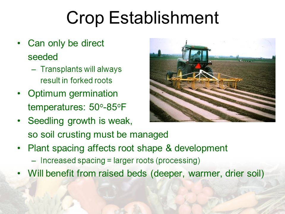 Crop Establishment Can only be direct seeded Optimum germination