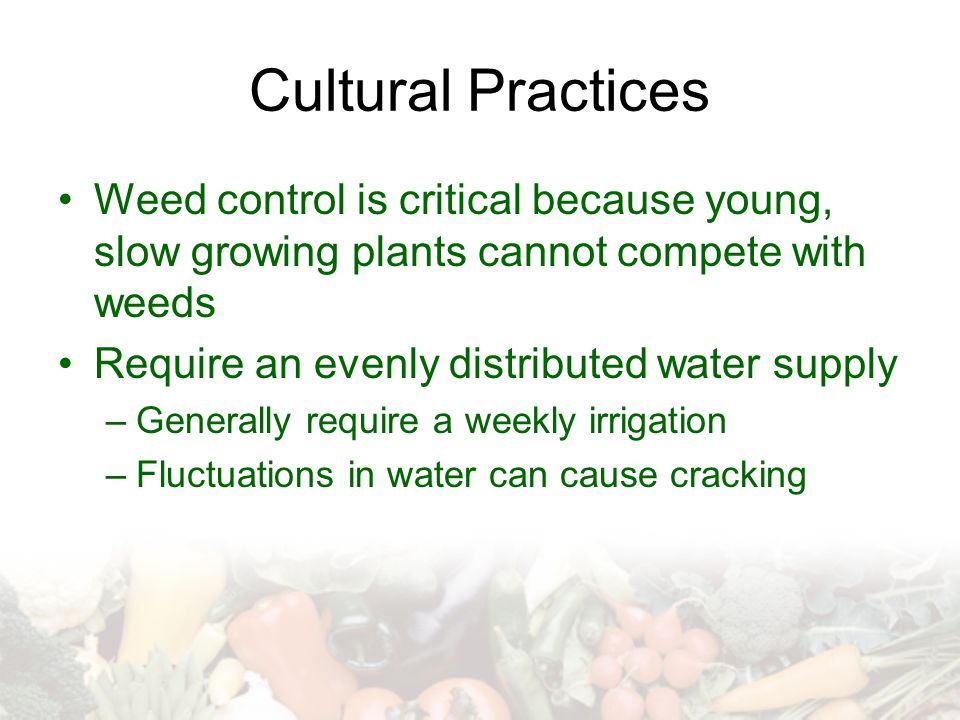Cultural Practices Weed control is critical because young, slow growing plants cannot compete with weeds.