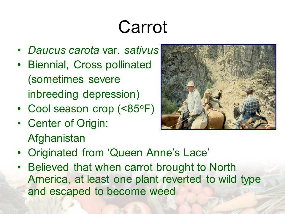 Carrot Daucus carota var. sativus Biennial, Cross pollinated