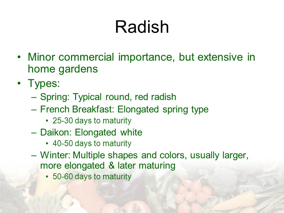 Radish Minor commercial importance, but extensive in home gardens