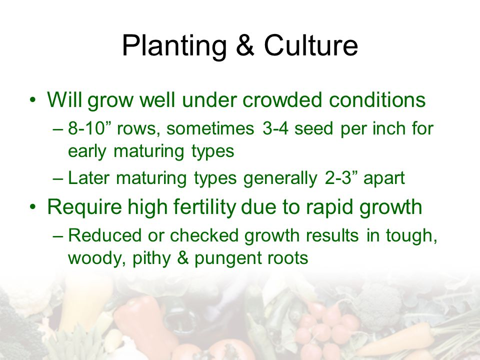 Planting & Culture Will grow well under crowded conditions