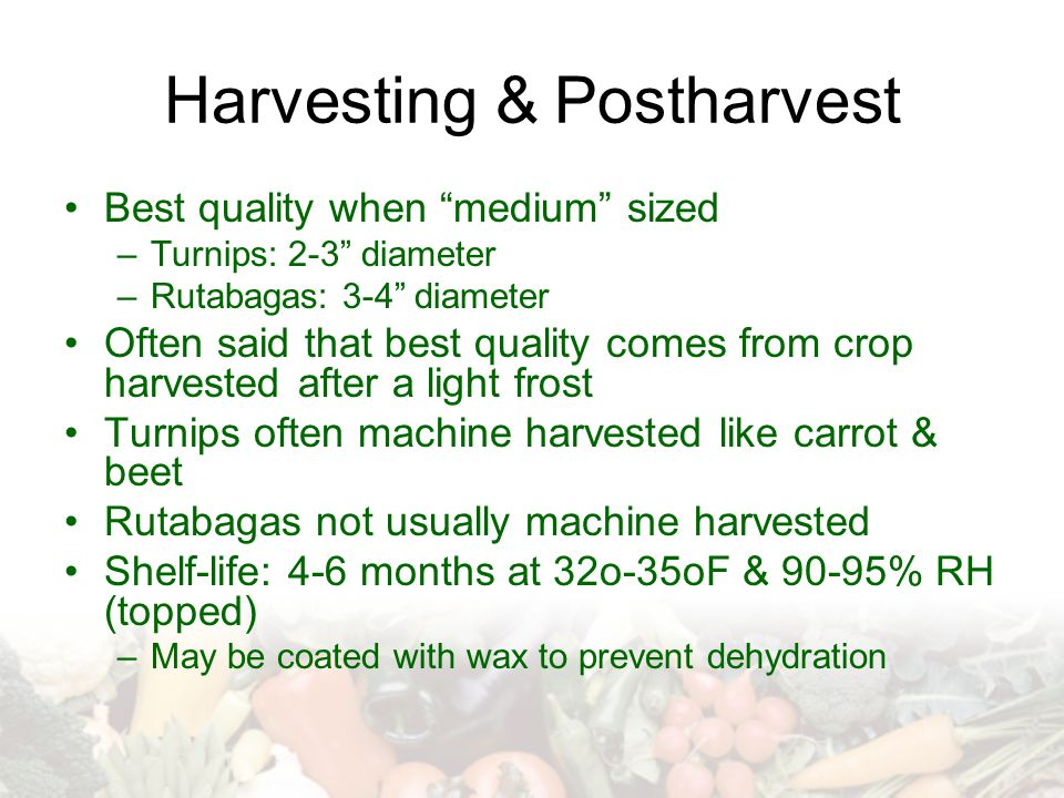 Harvesting & Postharvest
