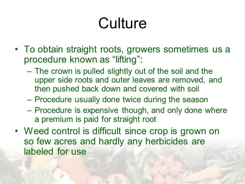 Culture To obtain straight roots, growers sometimes us a procedure known as lifting :