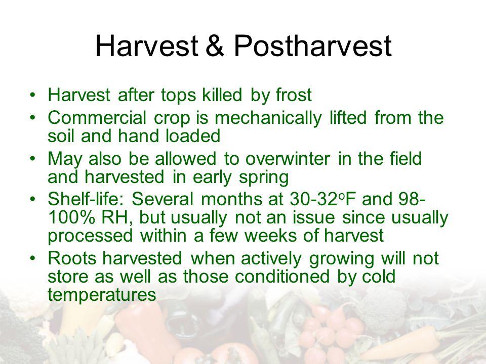 Harvest & Postharvest Harvest after tops killed by frost
