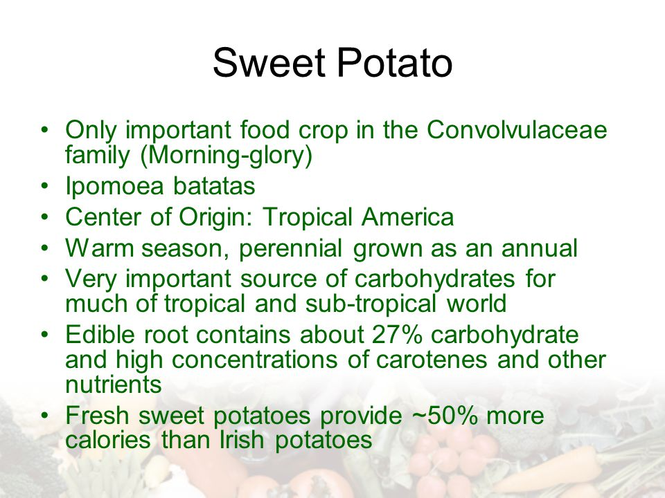 Sweet Potato Only important food crop in the Convolvulaceae family (Morning-glory) Ipomoea batatas.
