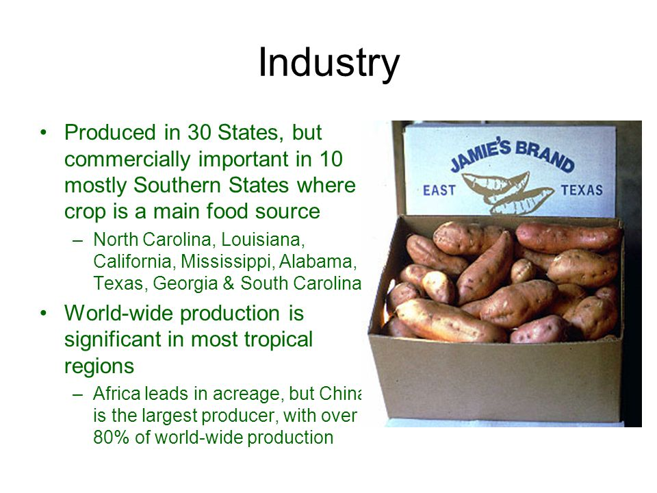 Industry Produced in 30 States, but commercially important in 10 mostly Southern States where crop is a main food source.