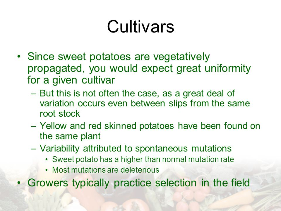 Cultivars Since sweet potatoes are vegetatively propagated, you would expect great uniformity for a given cultivar.