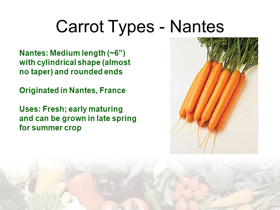 Carrot Types - Nantes Nantes: Medium length (~6 ) with cylindrical shape (almost no taper) and rounded ends.