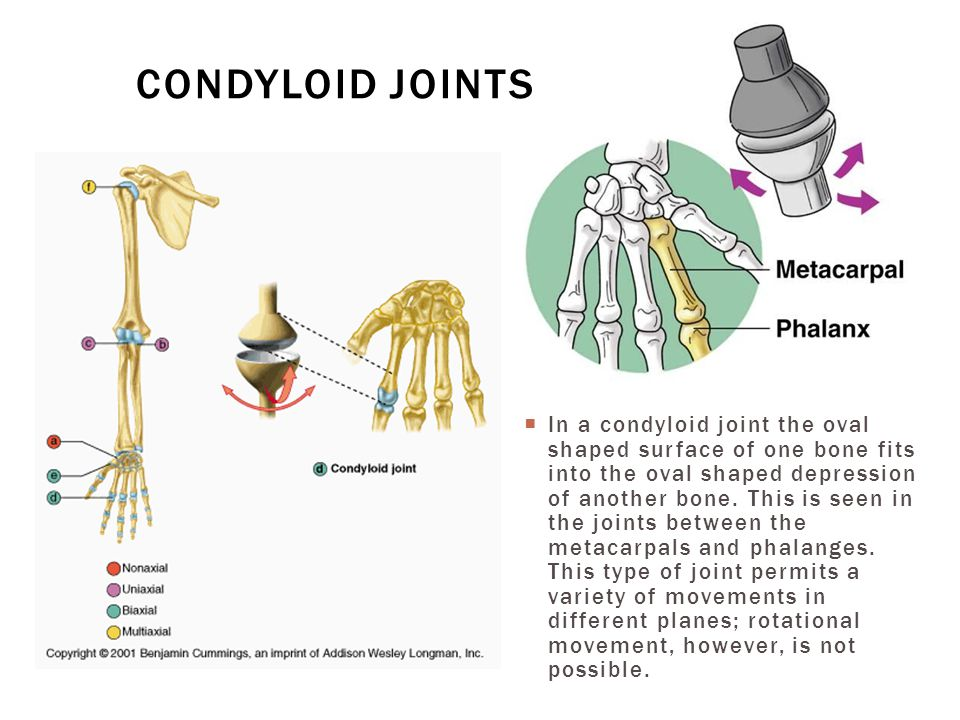 Condyloid joints
