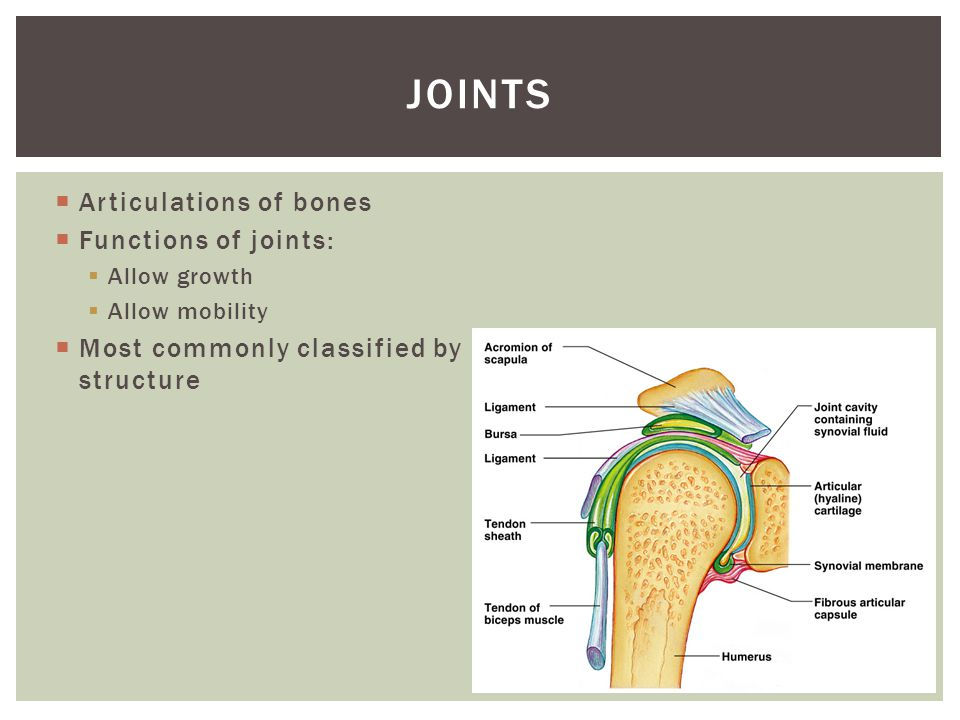 joints Articulations of bones Functions of joints: