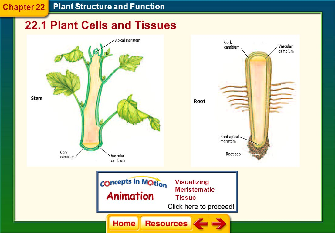 22.1 Plant Cells and Tissues