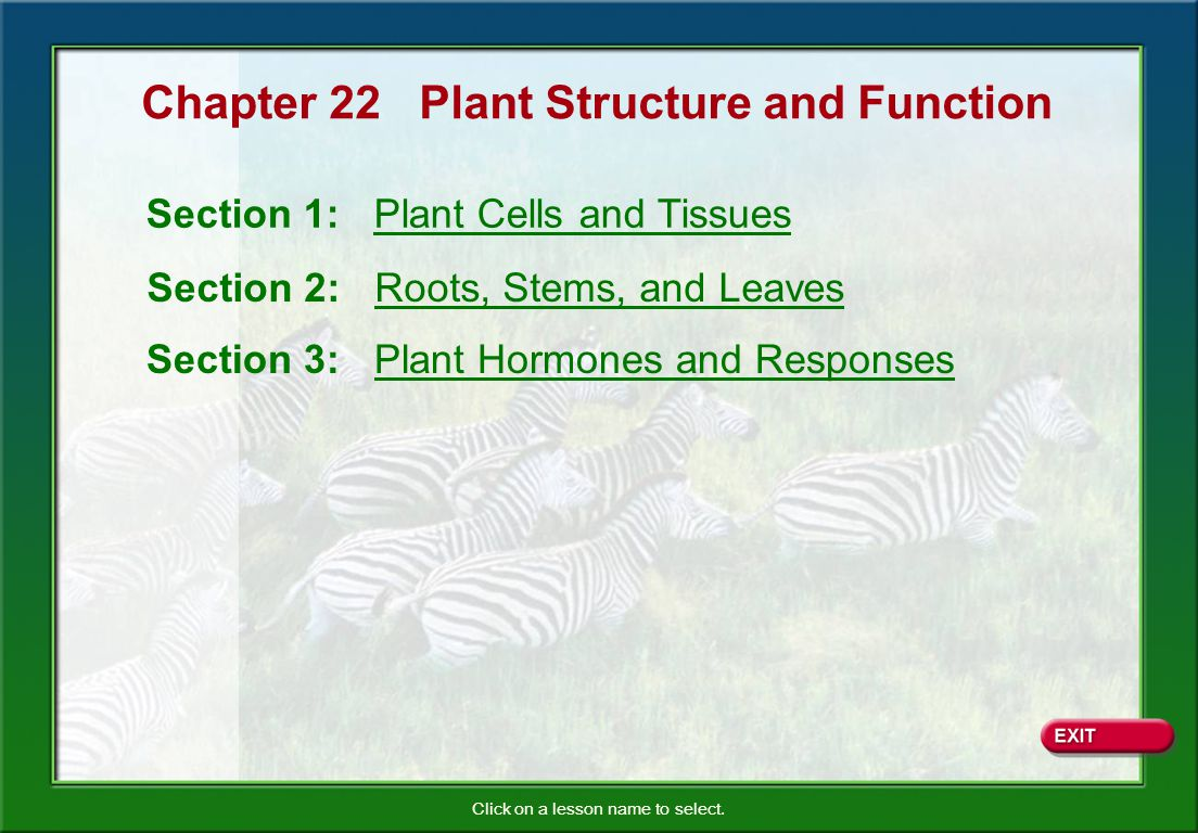 Chapter 22 Plant Structure and Function