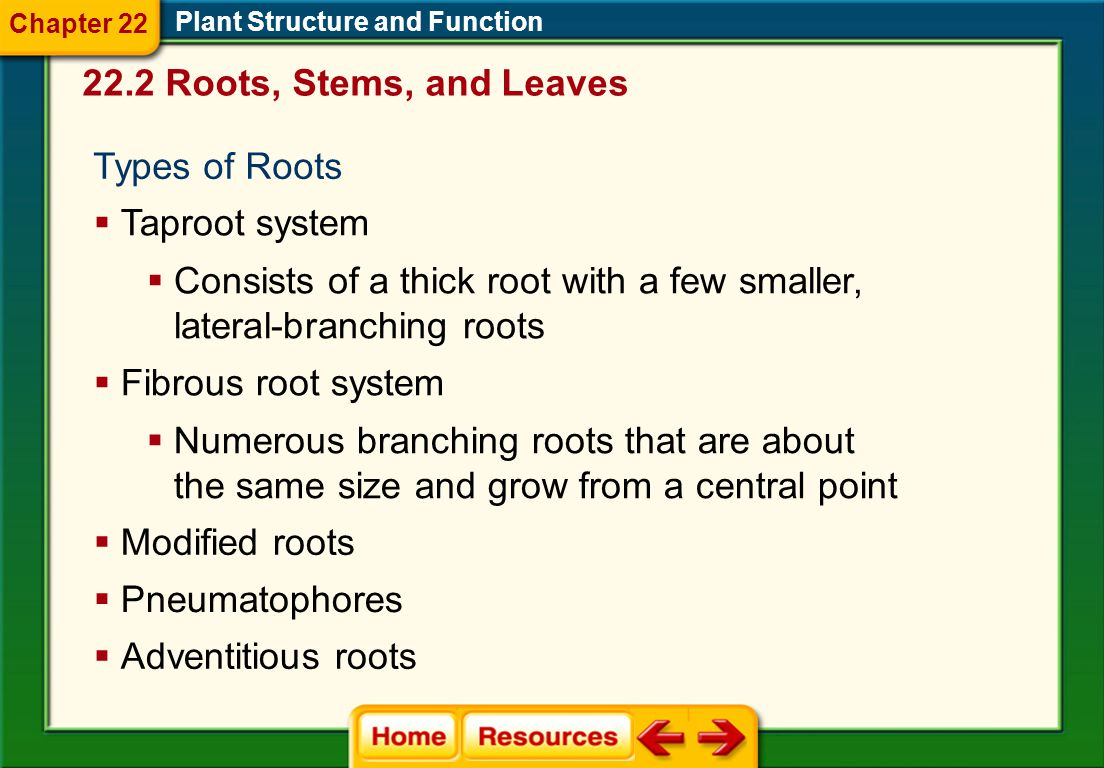 Consists of a thick root with a few smaller, lateral-branching roots