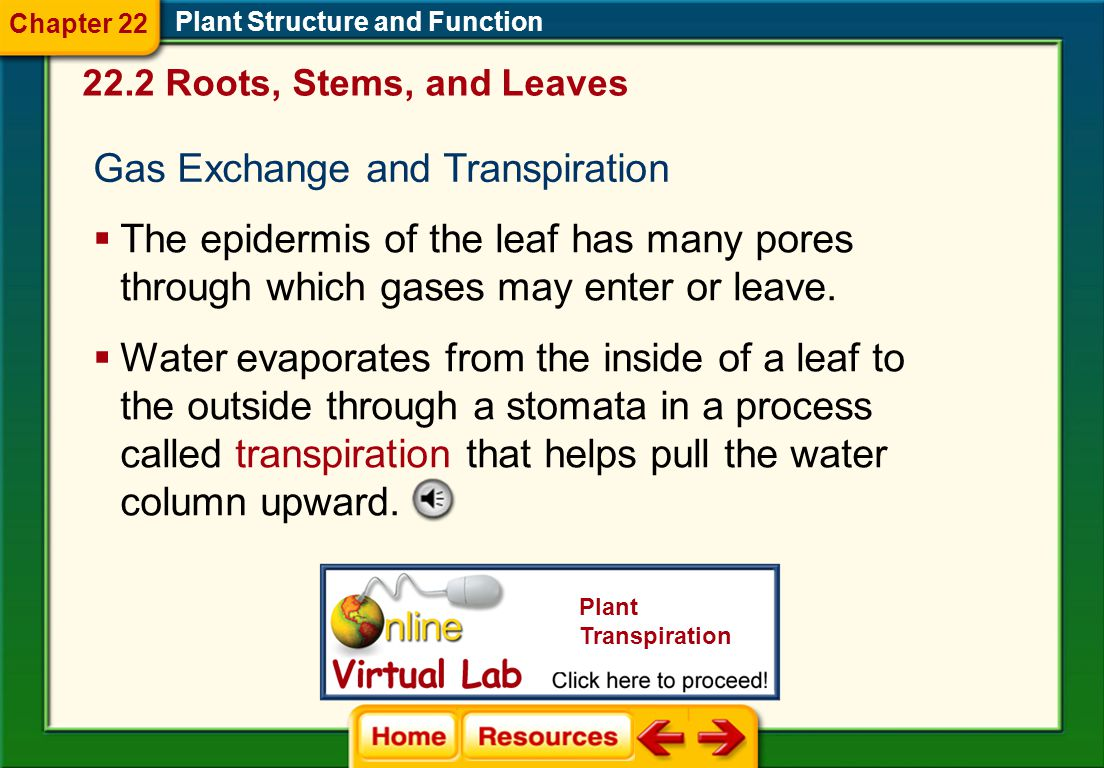 Gas Exchange and Transpiration