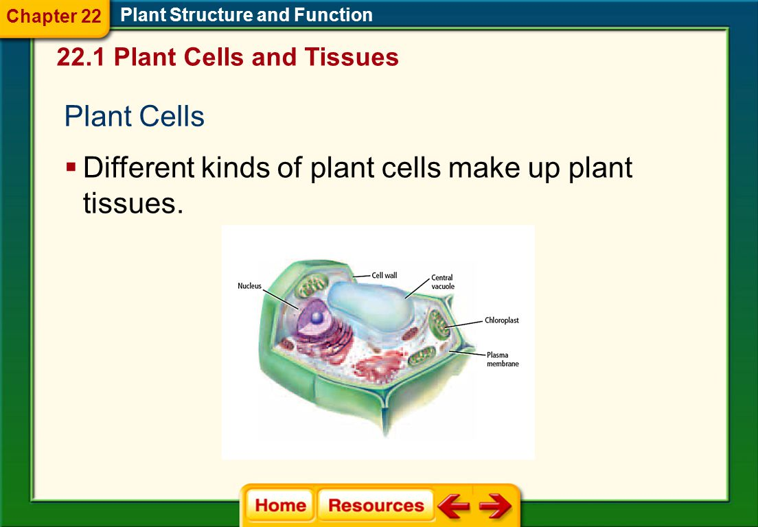 Different kinds of plant cells make up plant tissues.