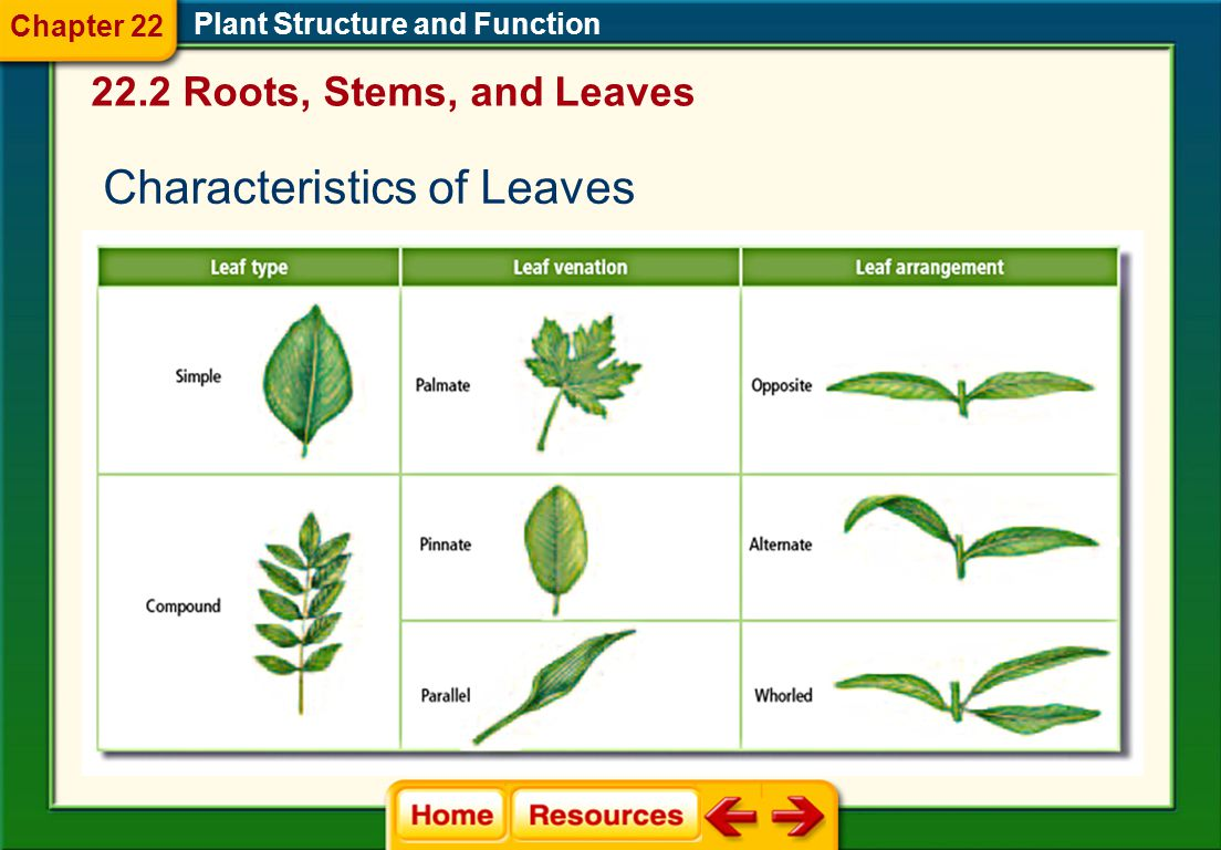 Characteristics of Leaves