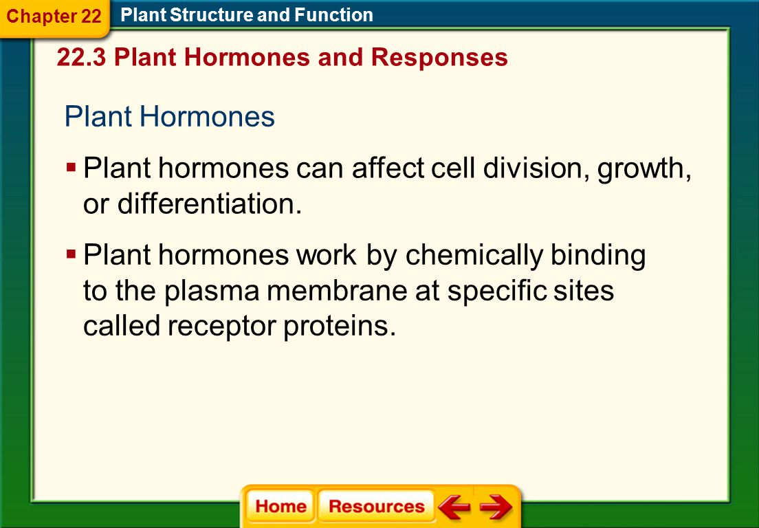 Plant hormones can affect cell division, growth, or differentiation.