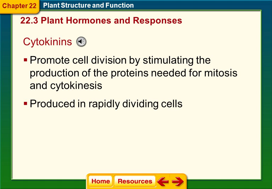 Produced in rapidly dividing cells